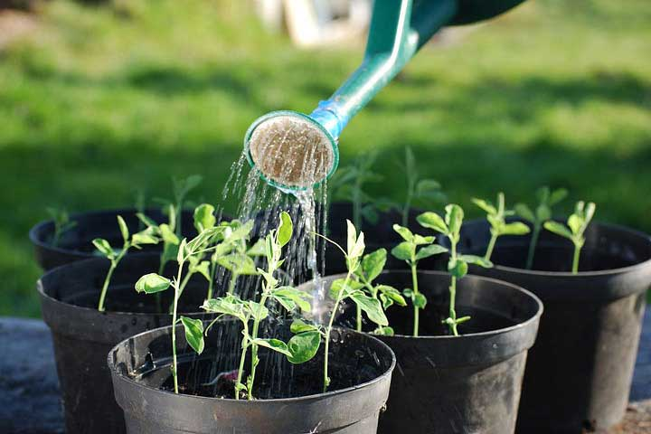 3 Things You Need Ensure If You Are Interested in Home Garden