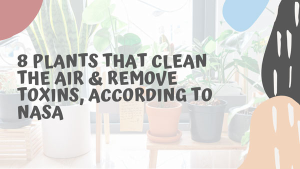 NASA Said These 8 Indoor Plants That Clean The Air and Remove Toxins Efficiently